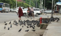 Monk and pigeons on Bo Gokye Aung San Road.